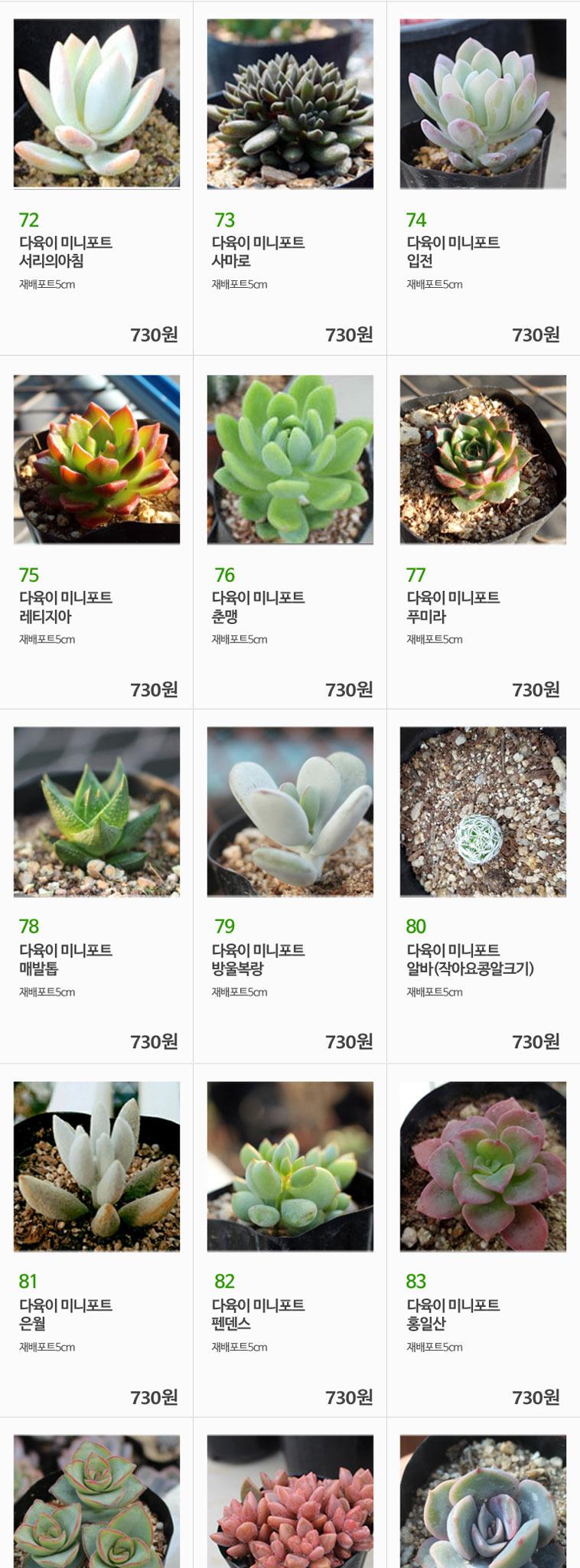 올망졸망 다육식물 골라담기 296종 - 상세정보