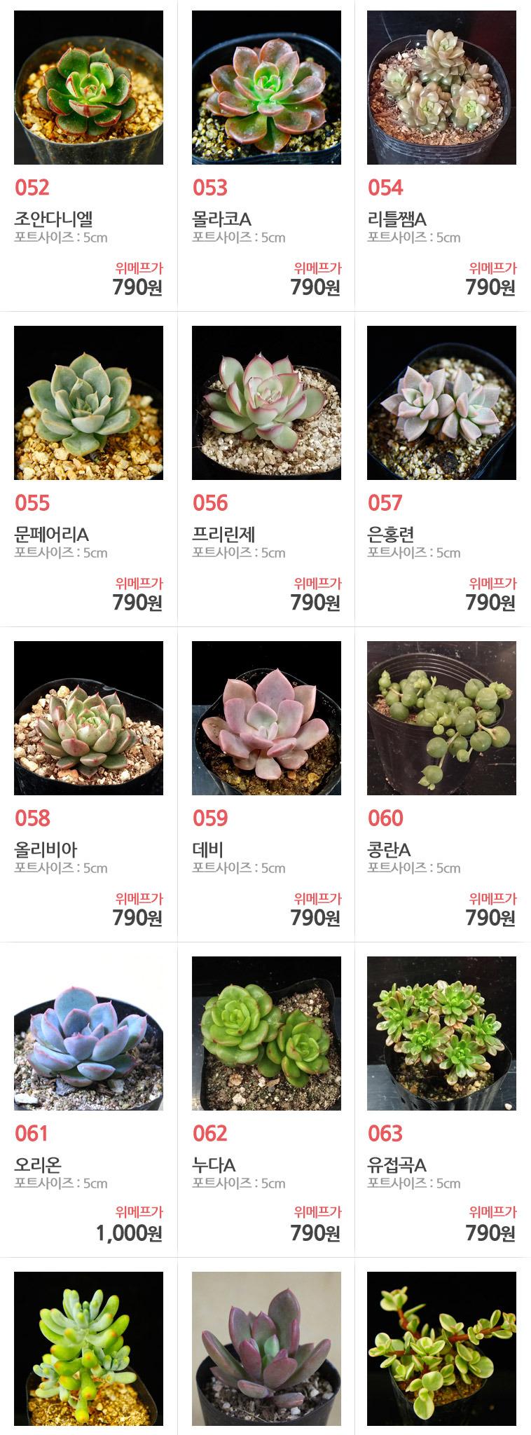 식물부터 화분까지 한번에~루비다육 - 상세정보