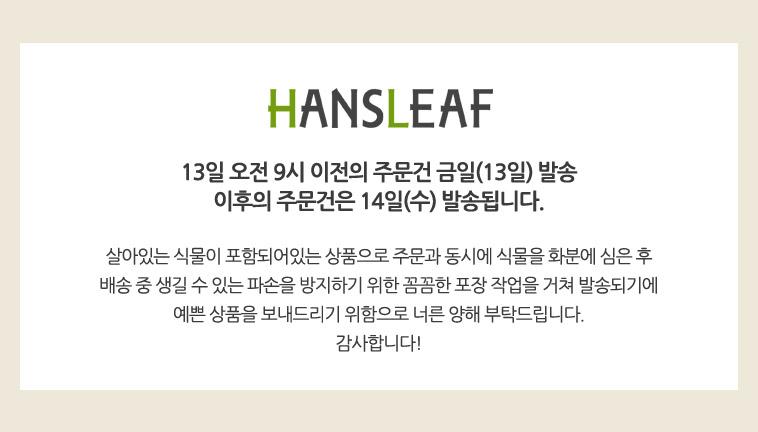 [무료배송] 화분 식물 화초 꽃 - 상세정보