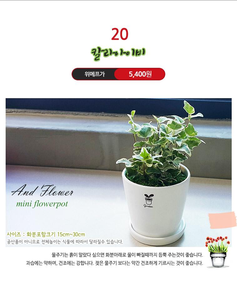 컬러선택! 공기정화식물 미니화분 - 상세정보