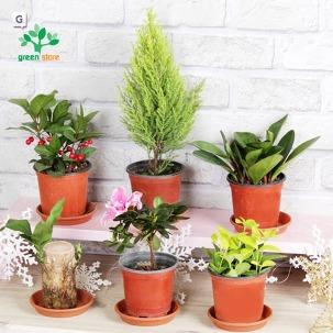 실내가습! 공기정화식물&다육