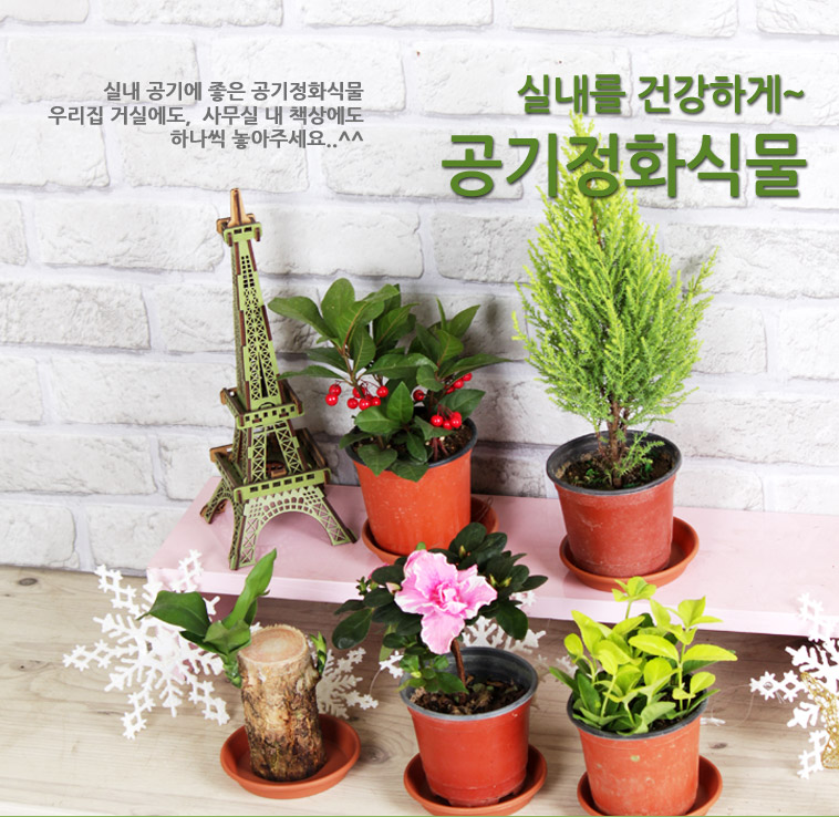 실내가습! 공기정화식물&다육 - 상세정보
