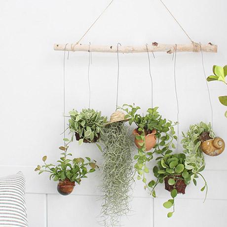 [모리앤]공기정화되는 식물 모음