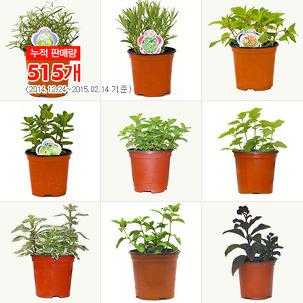 허브식물1+1+1 단돈3,600원