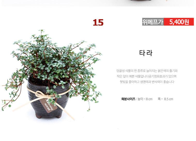 미니옹기화분 공기정화식물 70종 - 상세정보