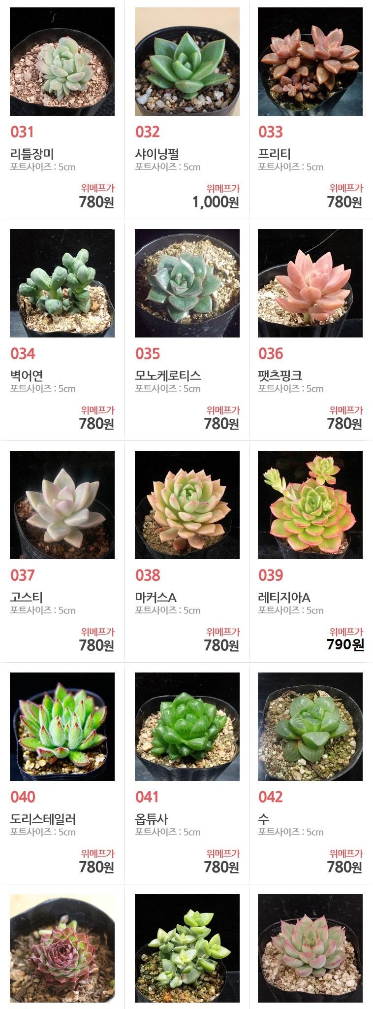 특별한 우리집 정원꾸미기 루비다육 - 상세정보