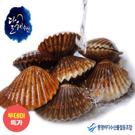 [투데이특가] 통영 홍가리비 3kg