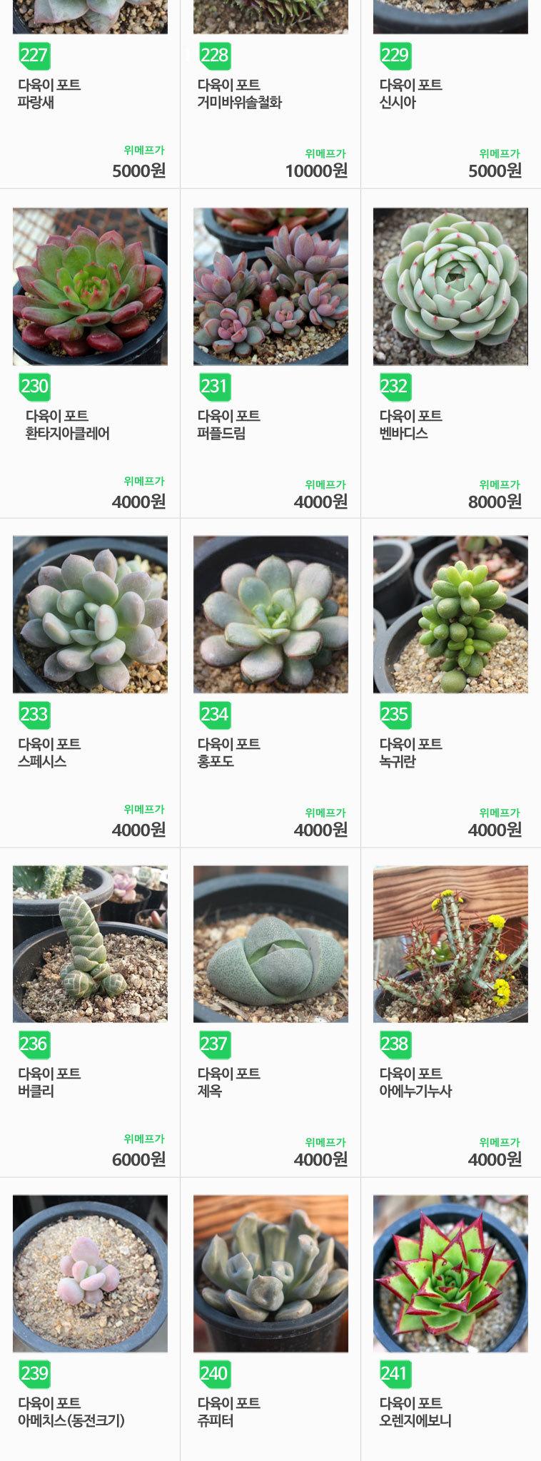 올망졸망 다육식물 골라담기 - 상세정보