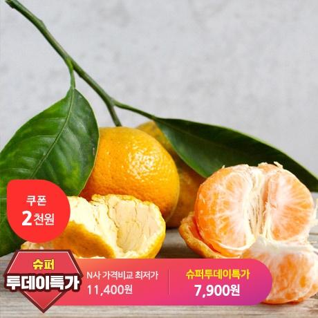 [슈퍼투데이특가] 조생귤 대과 10kg!