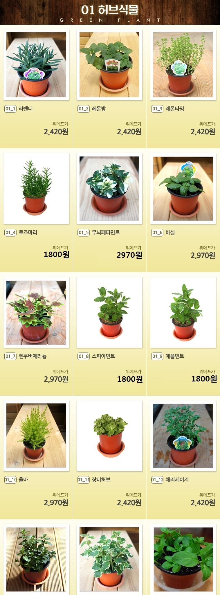 공기정화식물 화분! 골라담기 - 상세정보
