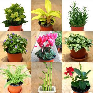 공기정화식물 화분! 골라담기