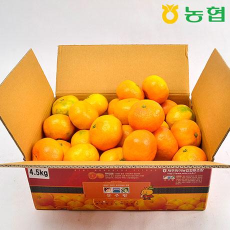 제주직송 농협 제주 감귤 5kg 출하!