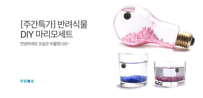 [주간특가] 동글동글 마리모 DIY세트_best banner_0_TODAY 추천^식품/생활/유아동_/deal/adeal/1856307