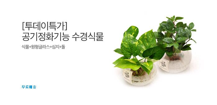 [투데이특가] 공기정화기능 수경식물_best banner_0_취미/문구/애완_/deal/adeal/1872259